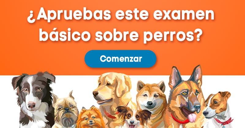 Naturaleza Quiz Test: ¿Apruebas este examen básico sobre perros?