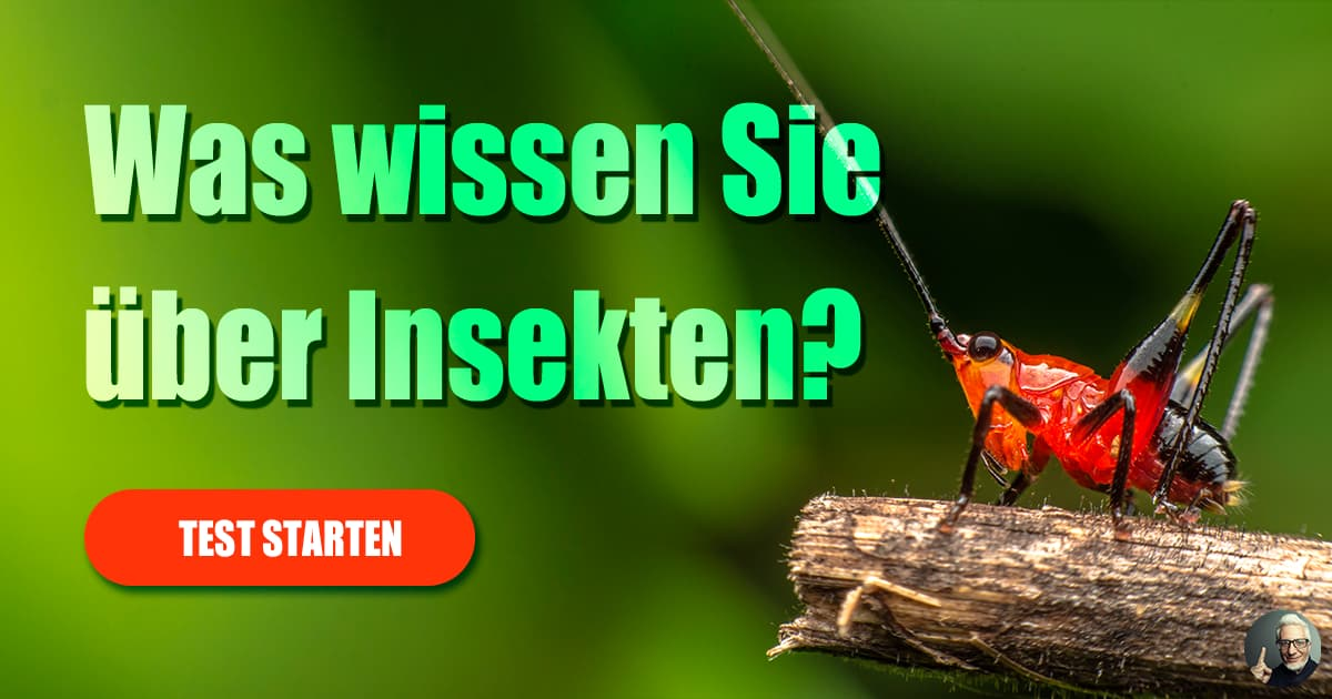 Insekten Quiz