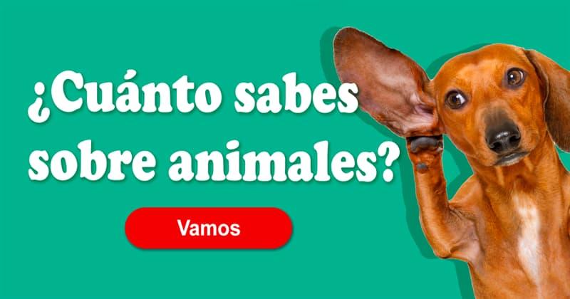 Naturaleza Quiz Test: ¿Cuánto sabés sobre animales?