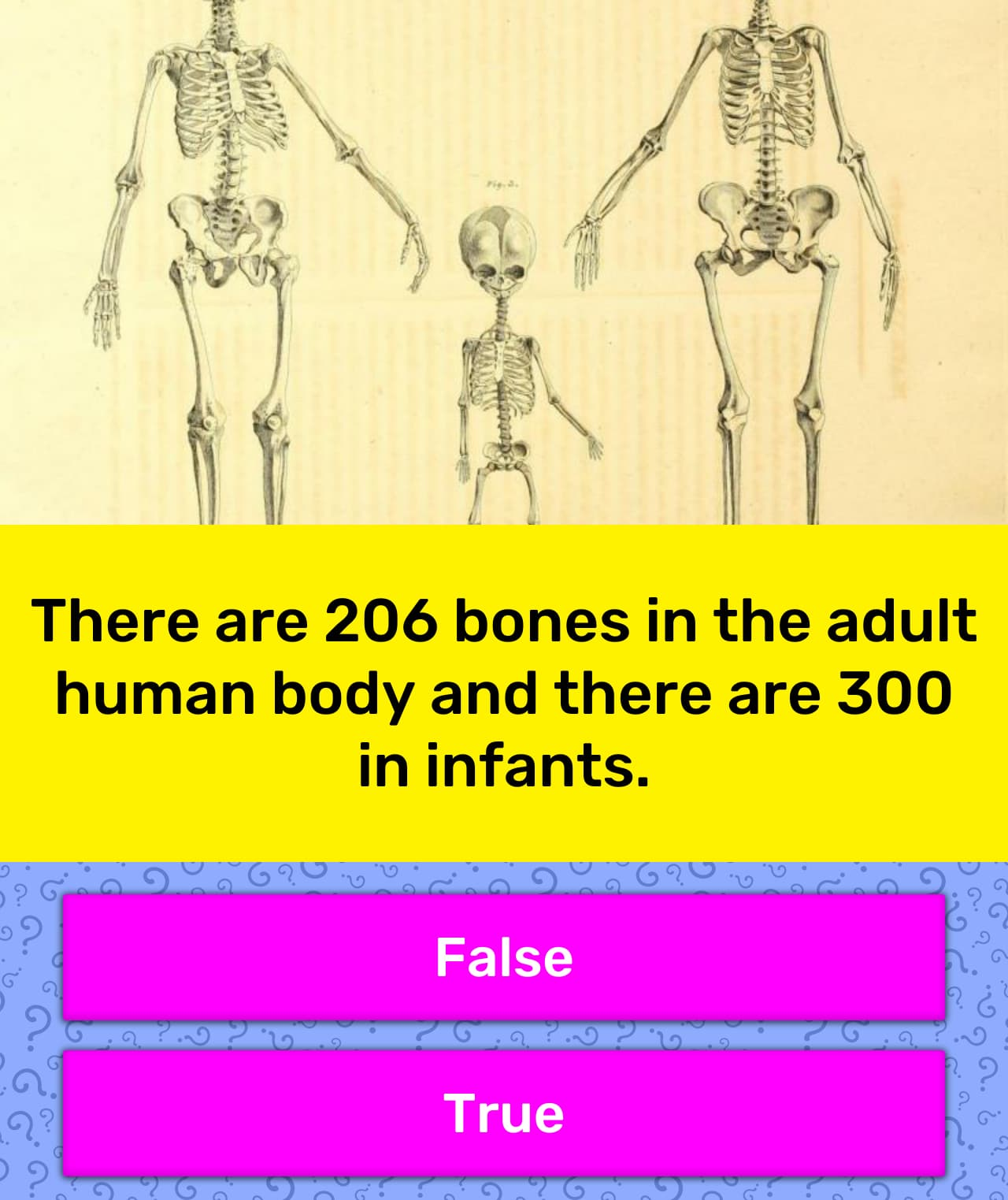 There are 206 bones in the adult      Trivia Questions