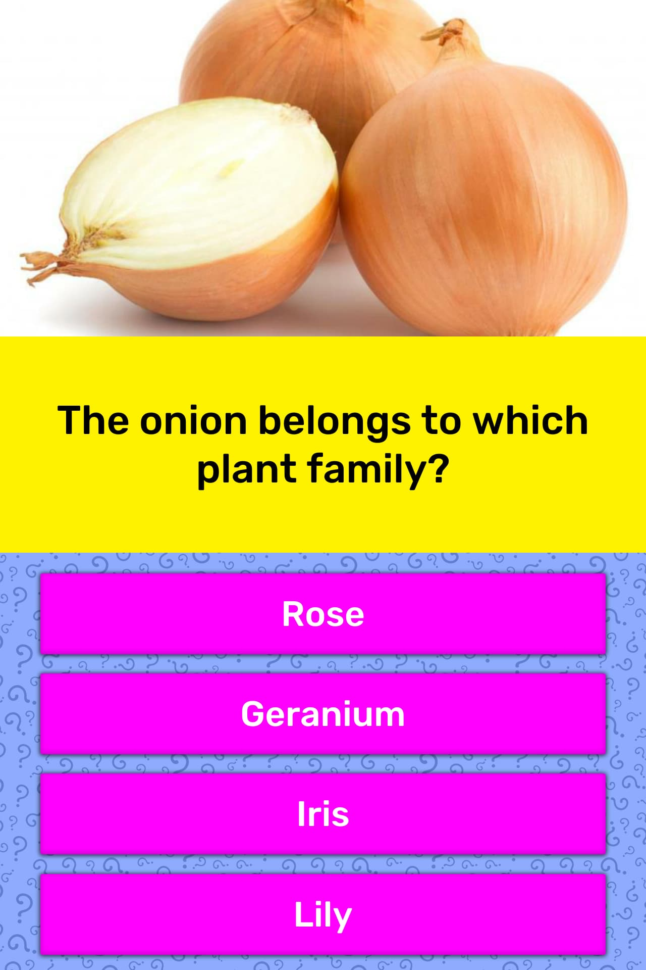 The Onion Belongs To Which Plant Family Trivia Answers Quizzclub