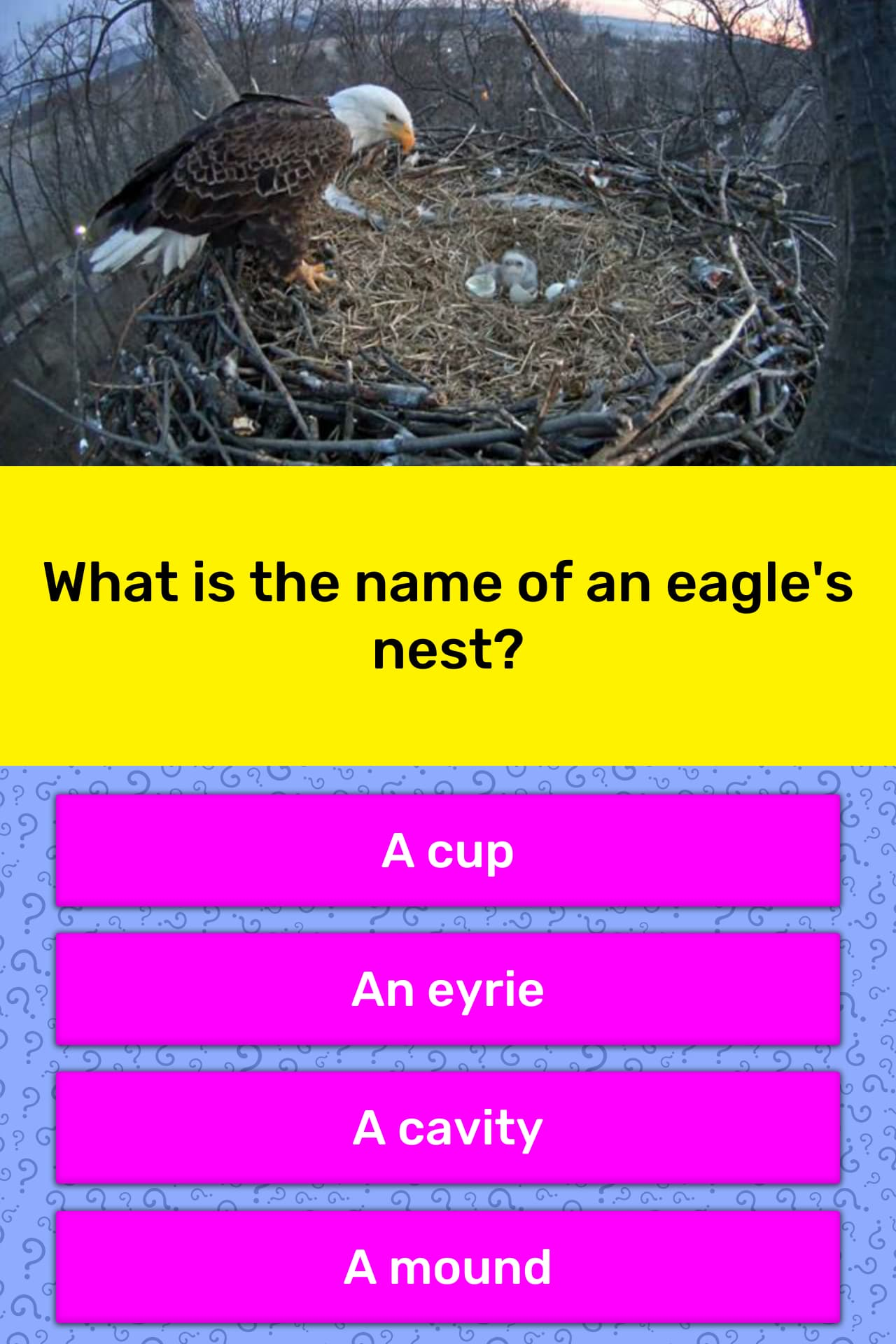 What Is The Name Of An Eagle S Nest Trivia Answers Quizzclub