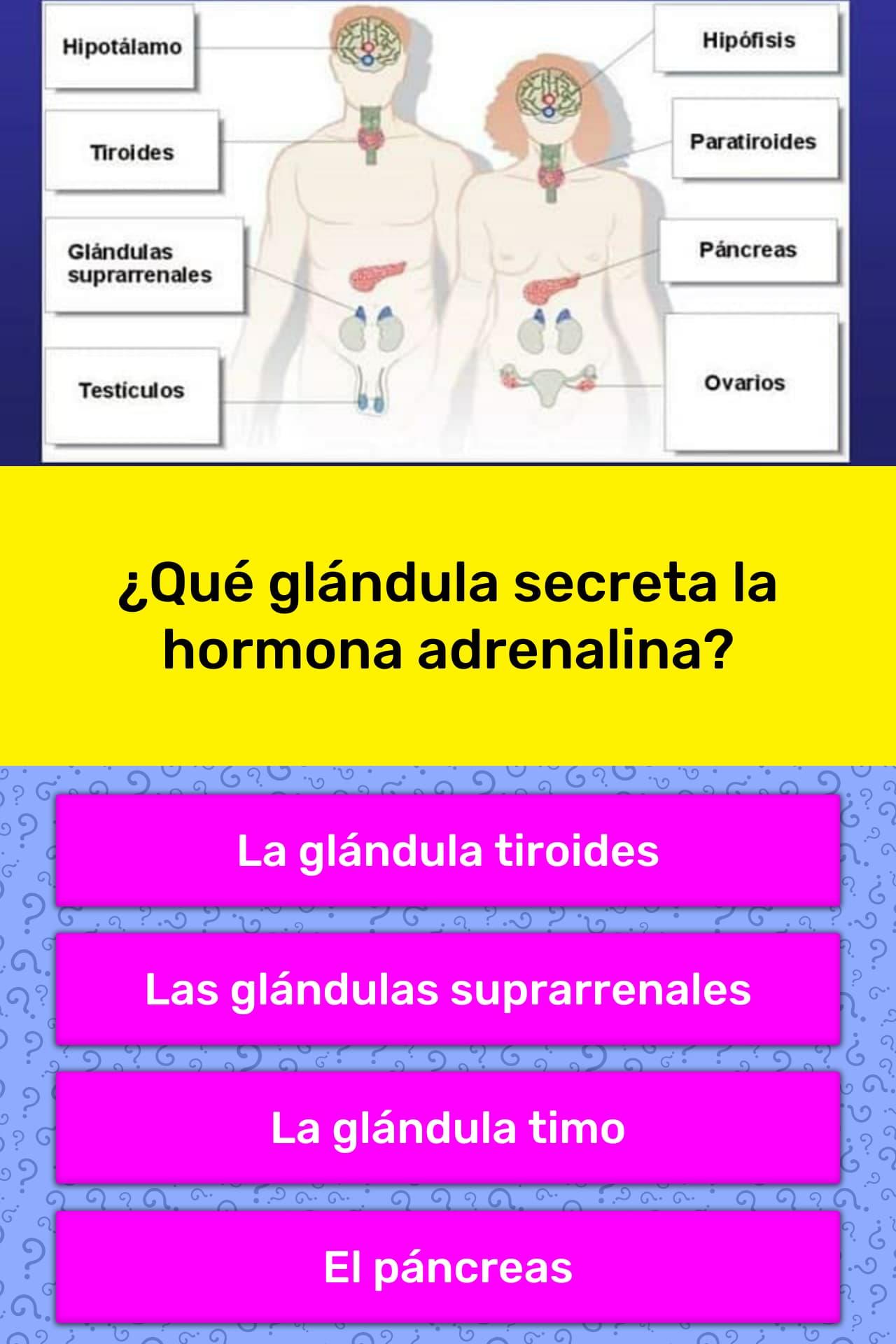 hormonas que libera glandulas suprarrenales