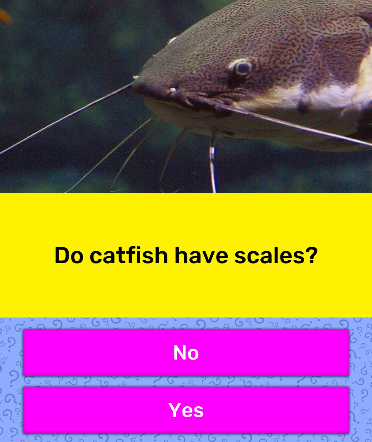 Do catfish have scales? | Trivia Answers | QuizzClub