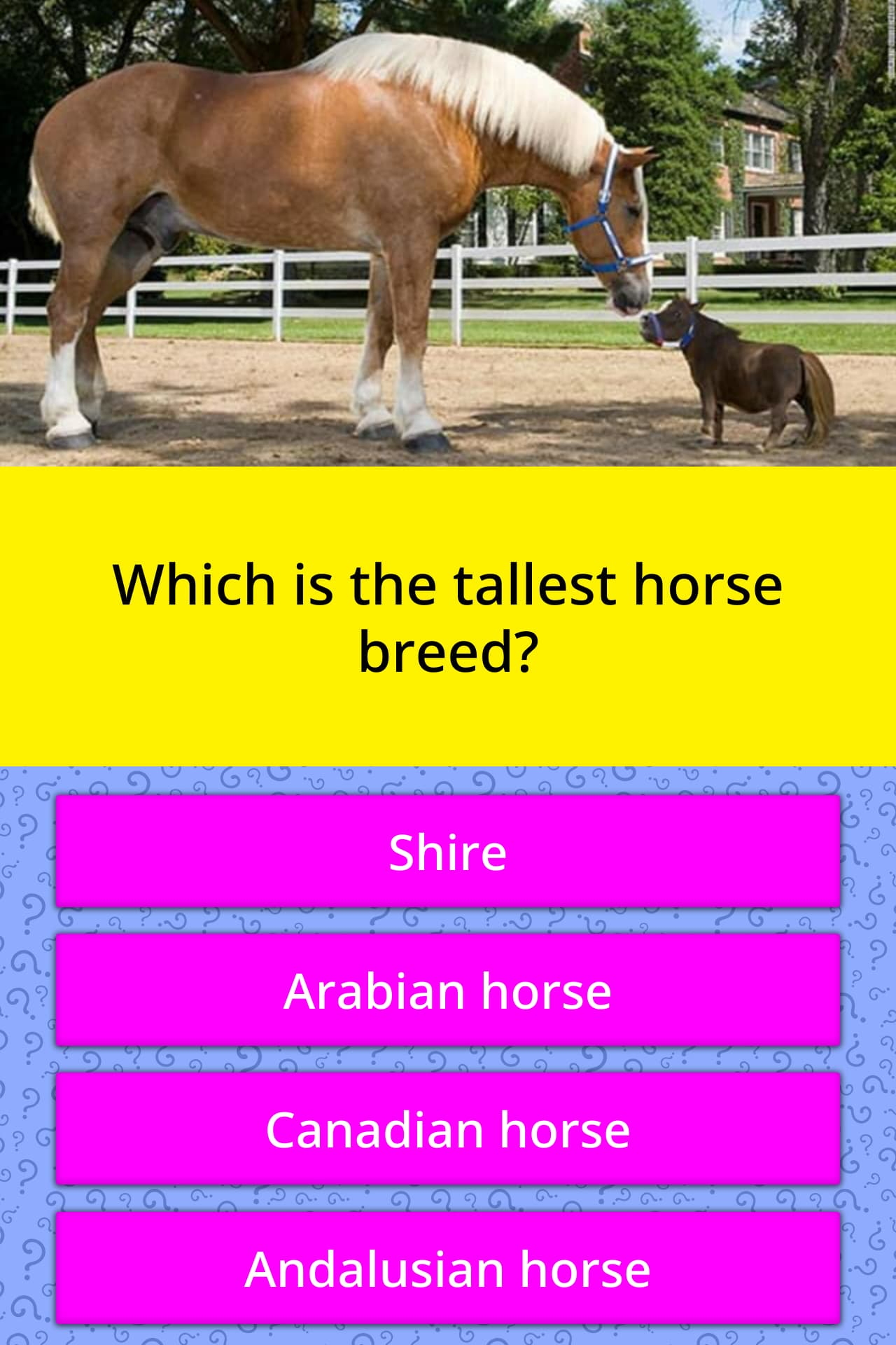 Which Is The Tallest Horse Breed Trivia Answers Quizzclub