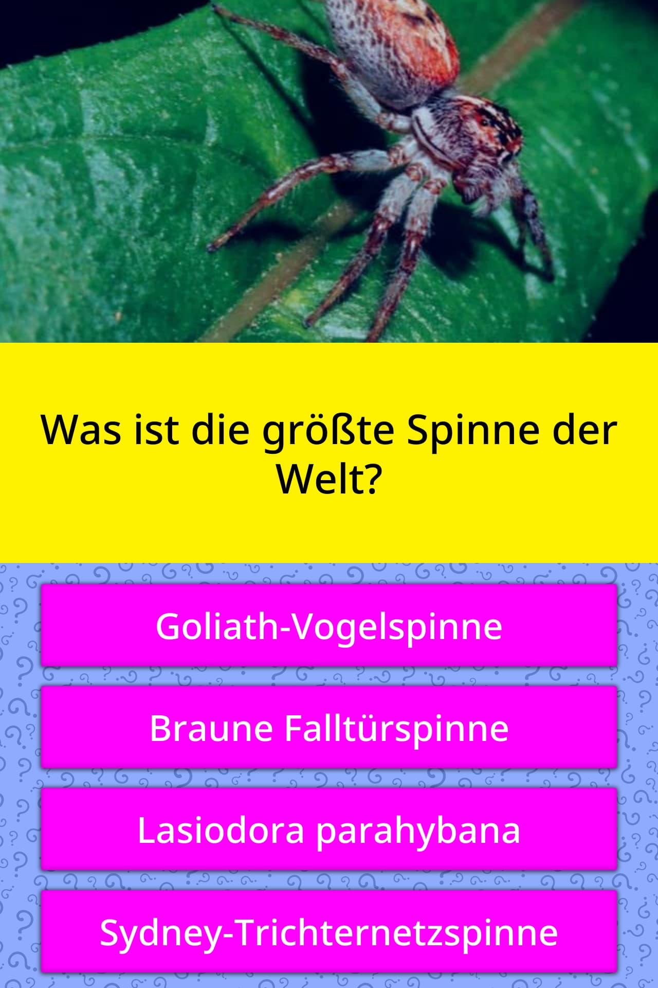 Was Ist Die Giftigste Spinne Der Welt