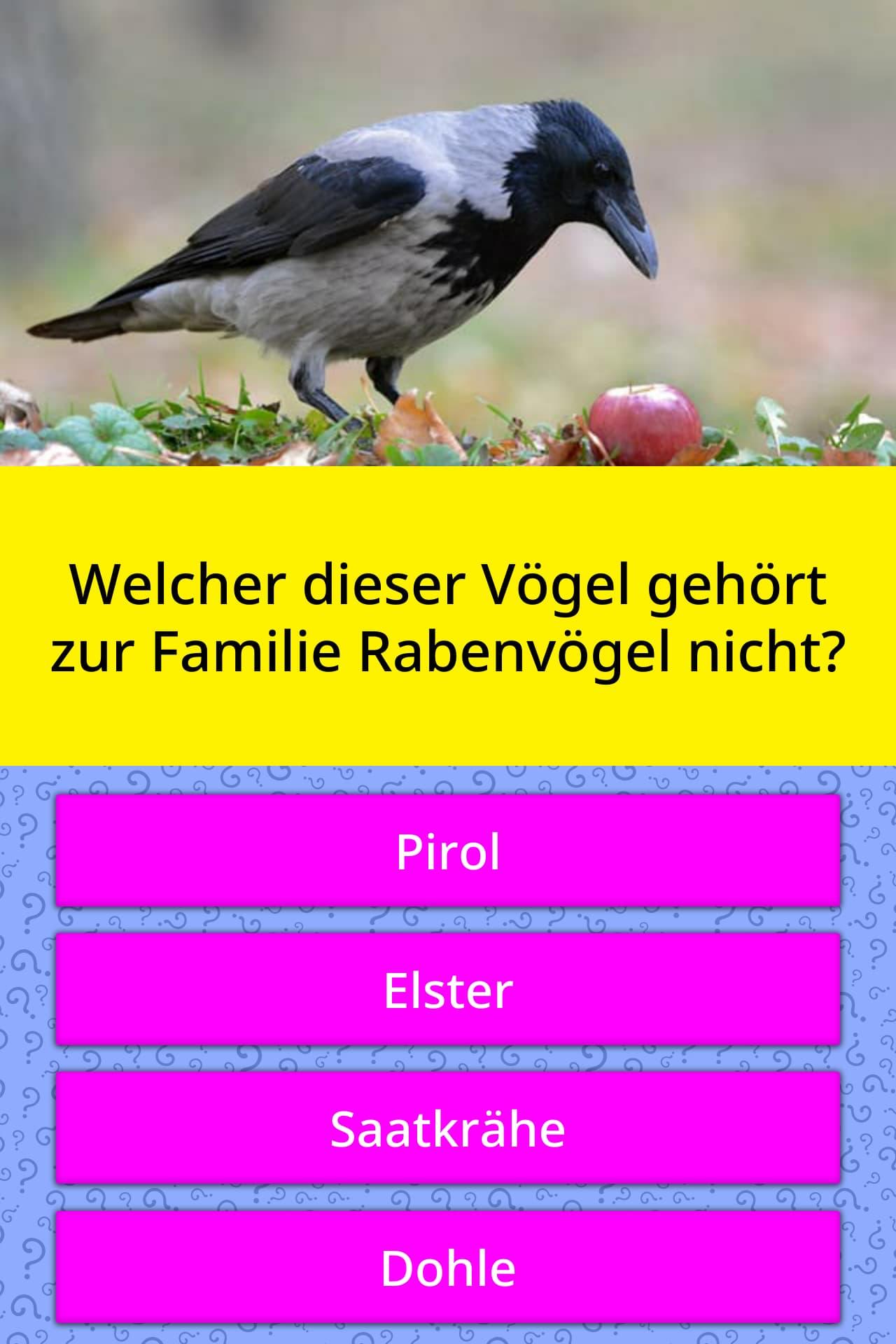 Familie Immerscharf 8 - Der Vögel-Wettbewerb