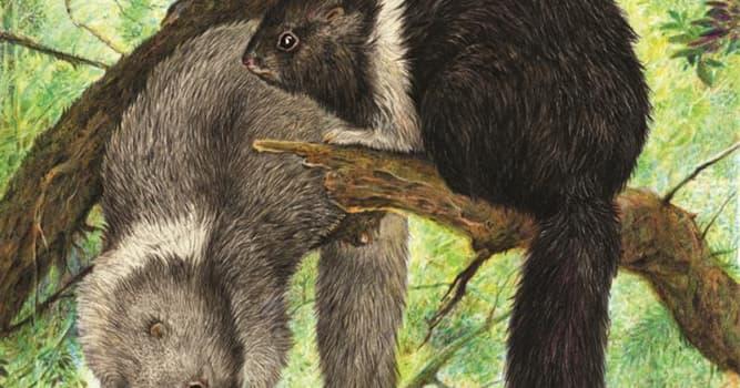Naturaleza Trivia: ¿Dónde se encuentra la mayor concentración de especies únicas de mamíferos?