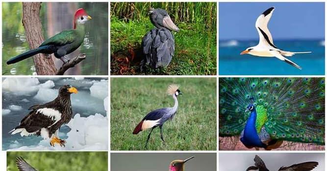 Природа Вопрос: Как вы думаете, какого цвета крылья имеет птица под названием краснокрылый малимбус?