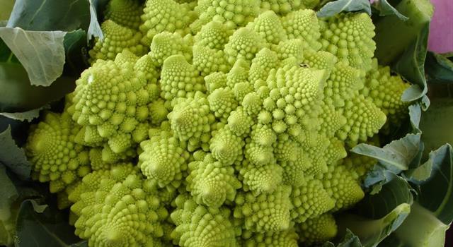 Naturaleza Pregunta Trivia: ¿Cuál es el nombre del  vegetal que aparece en la imagen?