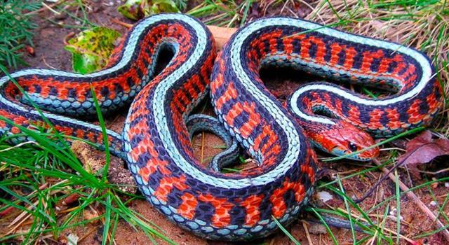 Naturaleza Pregunta Trivia: ¿En qué continente existen más serpientes venenosas que inocuas ?
