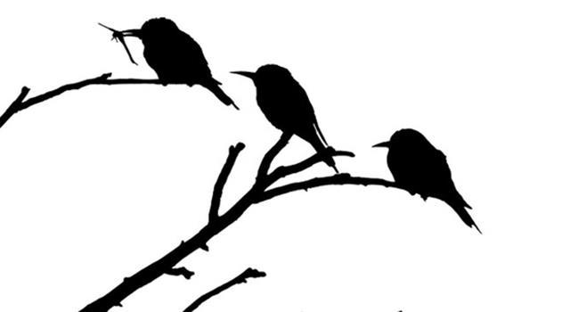 Naturaleza Pregunta Trivia: ¿Cuál es el pájaro nacional argentino?
