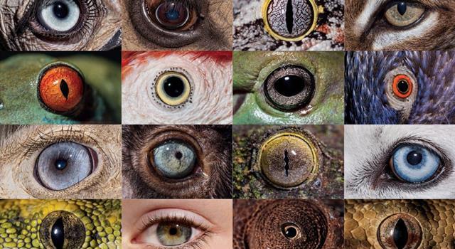 """Naturaleza Trivia: ¿Cuáles de los siguientes animales tienen un """"tercer párpado"""" o membrana nictitante completa?"""