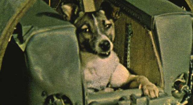 Сiencia Trivia: ¿Cuánto tiempo sobrevivió la perra Laika en el espacio, después que fue enviada en la nave Soviética Sputnik 2?