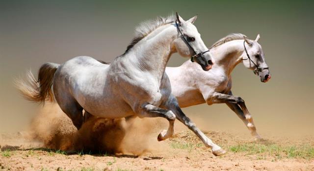 Historia Pregunta Trivia: ¿Qué pueblo mesopotámico fue el primero en la historia en usar el caballo con fines bélicos?