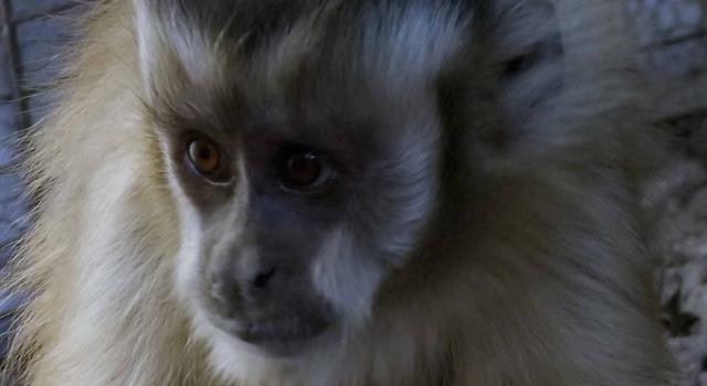 Сiencia Pregunta Trivia: ¿Quiénes fueron los ratones Belisario y Dalila y el mono Juan?