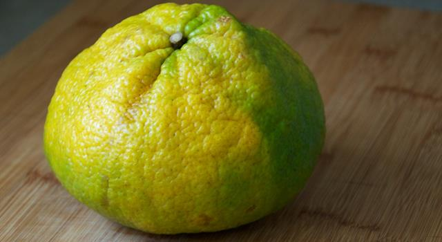 Nature Trivia Question: The ugli fruit is a cross between a grapefruit, an orange and which other fruit?