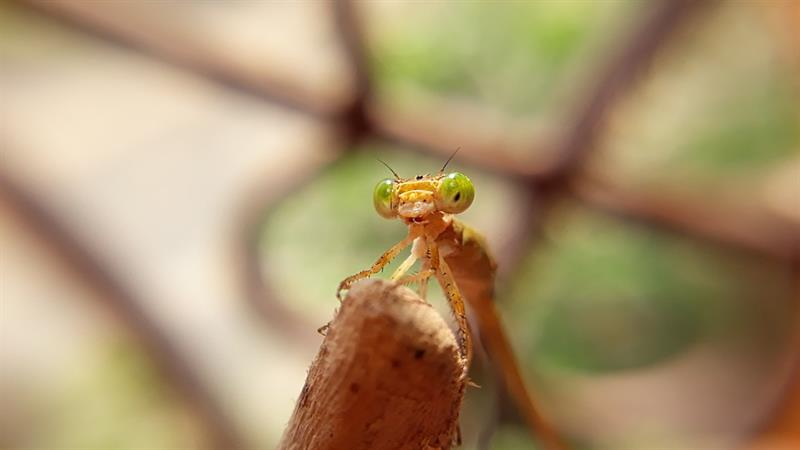 Nature Trivia Question: What insects have a king as well as a queen?