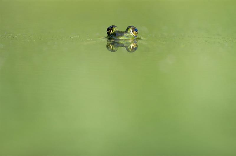Nature Trivia Question: What is a baby frog called?