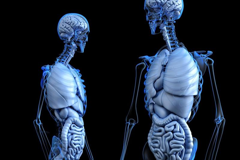 Science Trivia Question: What is a bone specialist called?