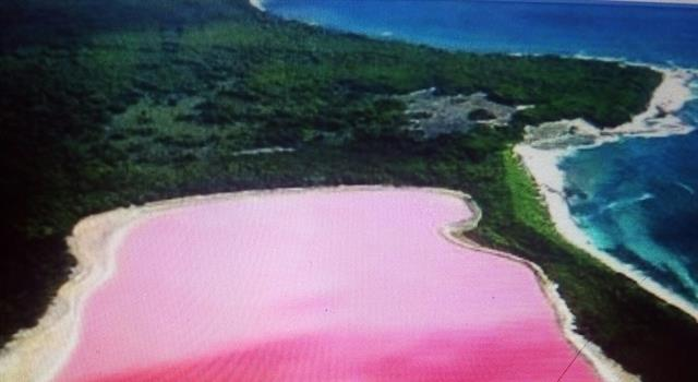 Geography Trivia Question: What makes the Pink Lake in Australia pink?
