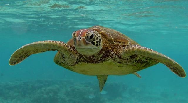 Nature Trivia Question: What is the scientific name for the upper body shell of a turtle?