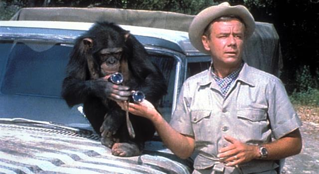 Movies & TV Trivia Question: What was the name of the chimpanzee in the TV series 'Daktari'?