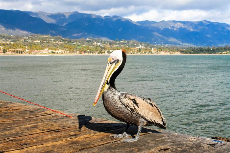 Geography Trivia Question: Which US state is called the Pelican State?