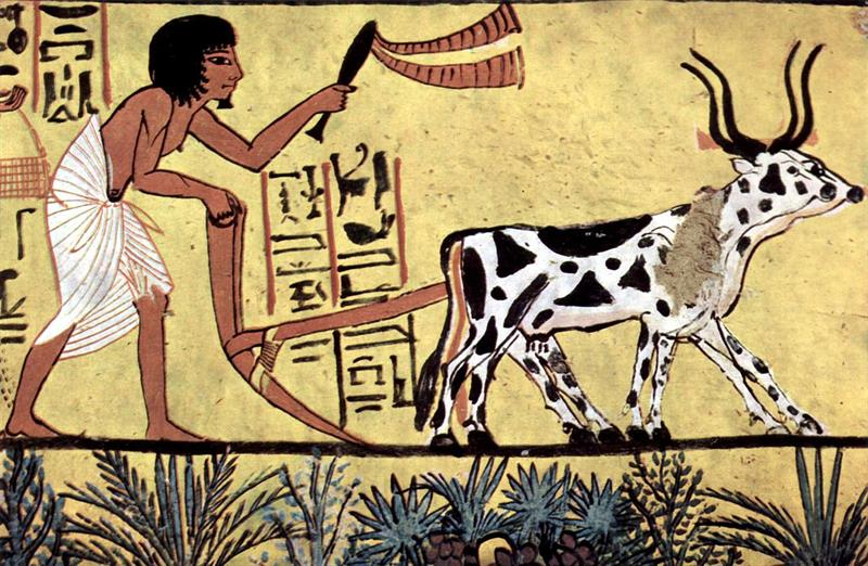 History Trivia Question: What was the sacred animal of ancient Egypt?