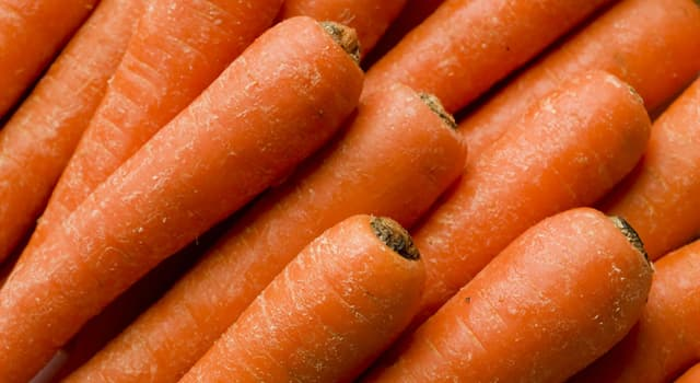 Nature Trivia Question: According to the Guinness Book of Records and as of 2018, how long is the world's longest carrot?