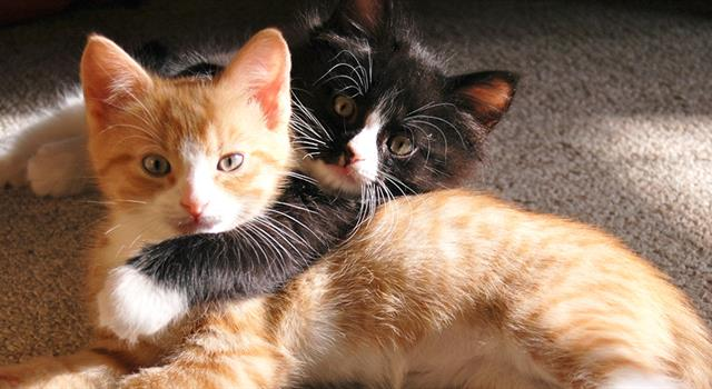 Society Trivia Question: According to Veterinary Pet Insurance, what were the most popular US cat names (male and female) in 2012?