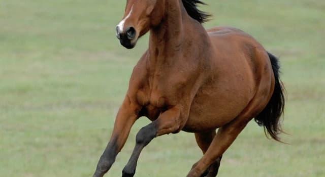 Cultura Pregunta Trivia: ¿Cómo se le dice al caballo que no ha sido domado?