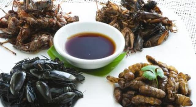 Naturaleza Pregunta Trivia: ¿Cuál es el insecto más consumido en todo el planeta?