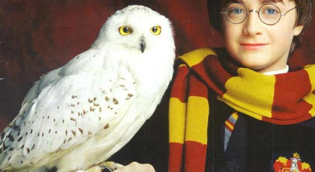 Film & Fernsehen Wissensfrage: Wie heißt die Eule von Harry Potter im Rowlings fiktiven Universum?