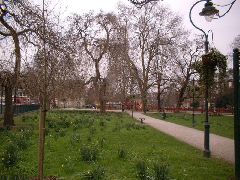 Nature Trivia Question: What is a Camberwell beauty?