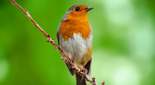 Geography Trivia Question: What is the national bird of America?