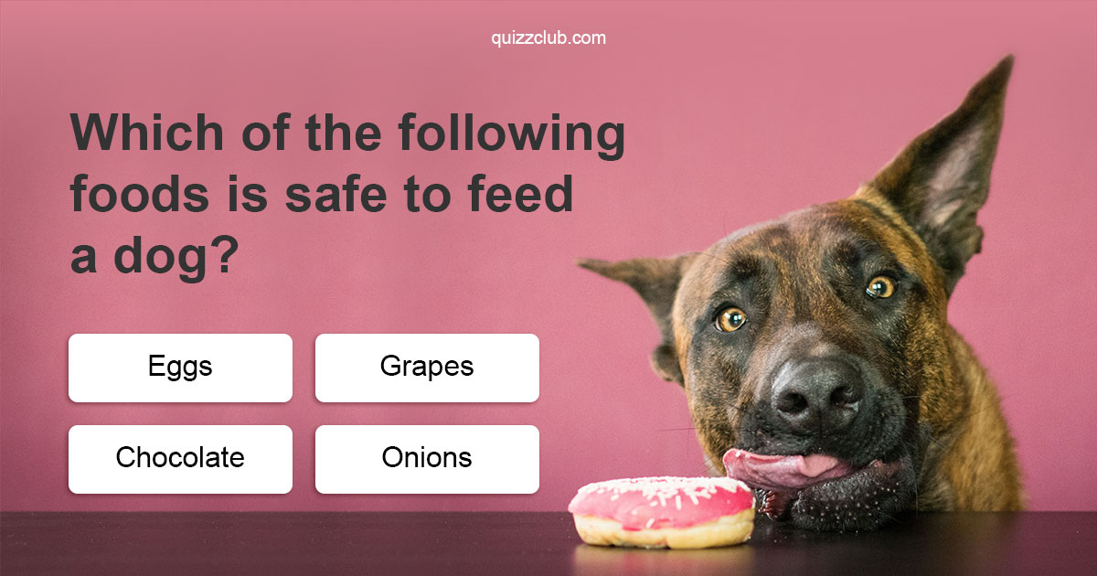 Foods That Cause Hyperactivity In Dogs