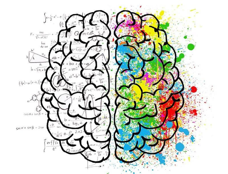 Science Trivia Question: Which side of the human body is controlled by the left side of the brain?