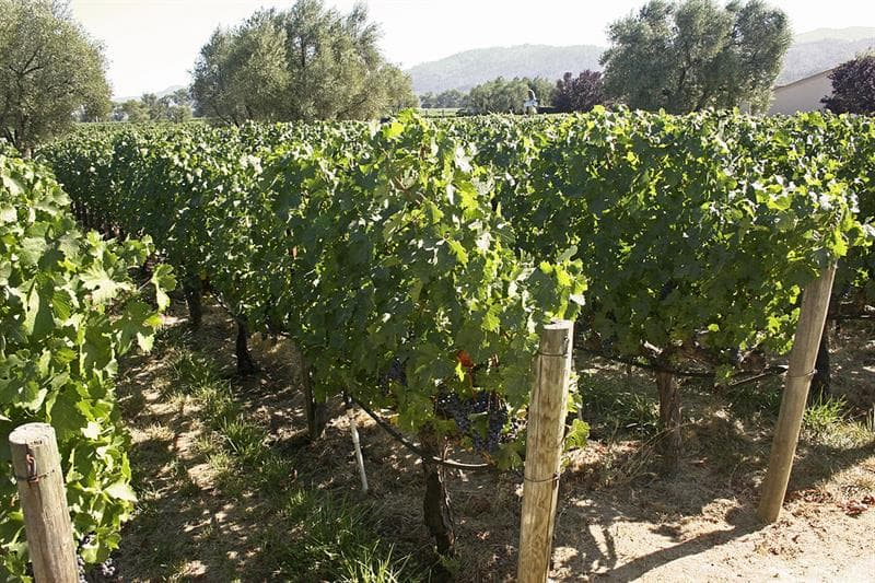 Culture Trivia Question: Which strong wine gets its name from a city in Northern Portugal?
