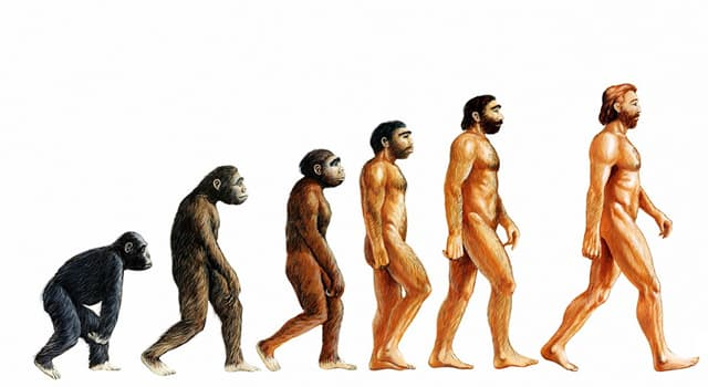 History Trivia Question: Who is best known for developing a theory of evolution?