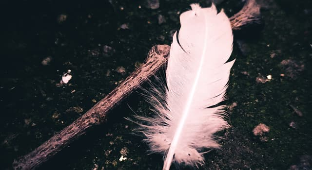 Culture Trivia Question: According to a popular superstition, what bird's feathers should never be in a house as decoration?