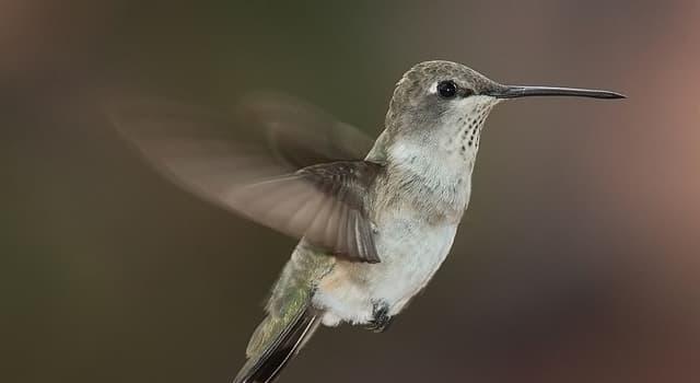 Naturaleza Trivia: ¿Cuál es el pájaro más pequeño del mundo?