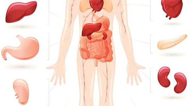 Science Trivia Question: Cholecystitis affects what part of the human body?