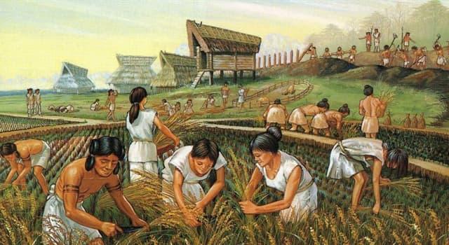Historia Trivia: ¿Con qué otro nombre se conoce al período Neolítico?