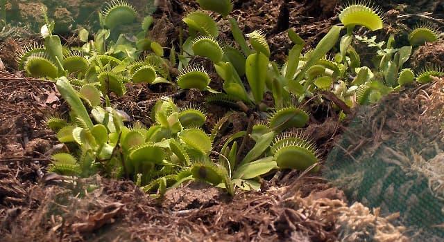 Сiencia Trivia: ¿Cuál es el nombre de esta planta?