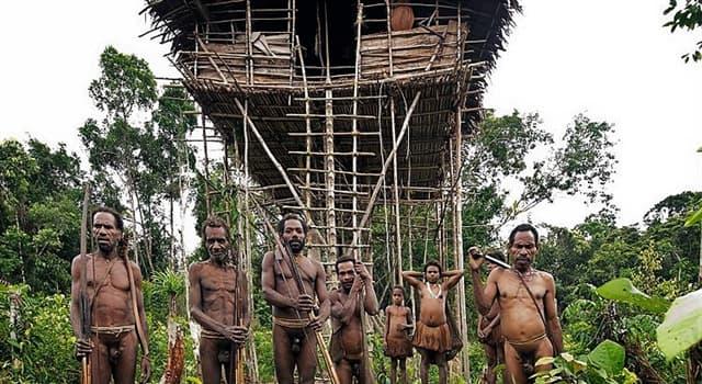 Sociedad Pregunta Trivia: ¿Dónde habita la tribu Korowai?