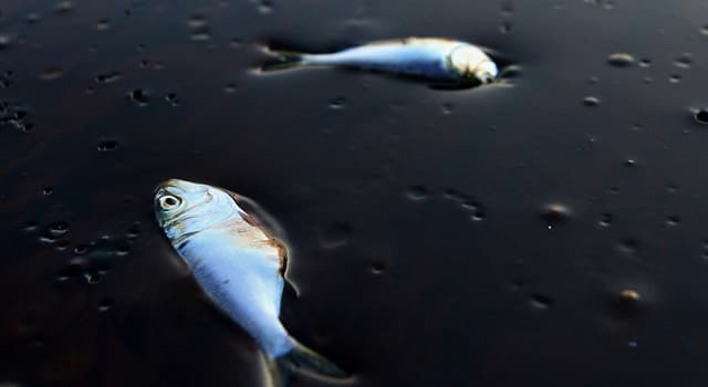 Naturaleza Trivia: ¿En qué país ocurrió el mayor derrame de petróleo en agua dulce?