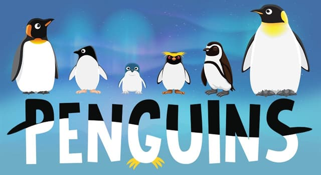 Nature Trivia Question: How many extant species of penguin are there?