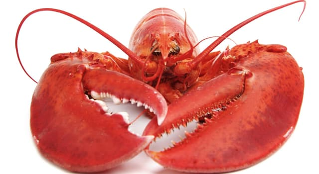 Nature Trivia Question: How many legs does a lobster have?