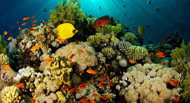 Naturaleza Pregunta Trivia: ¿La Barrera de Coral de Belice es la más grande del Mar Caribe?